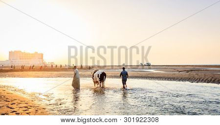 Sohar, Oman, May 28, 2016: Local men are bathing a bull at a beach in Sohar, Oman