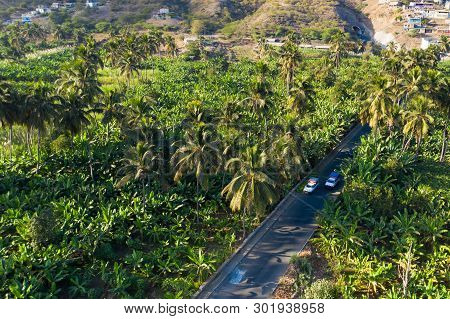 Coconut, Banana, And Sugar Canne Plantation Near Achada Fazenda In Santiago Island  In Cape Verde -