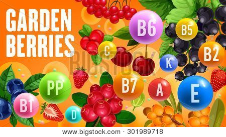 Farm Garden Berry Harvest Of Cherry, Black Currant Or Redcurrant And Strawberry. Vector Vitamins And