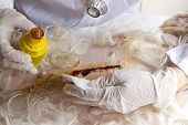 Wound cleansing operation of a dog into the abdomen poster