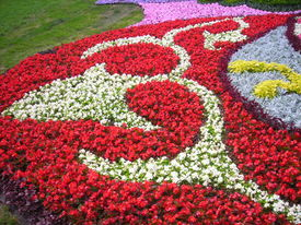 Flower Lawn