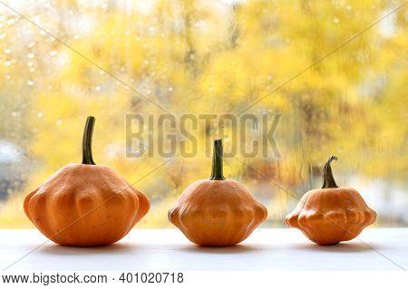 Three Orange Squash On The Background Of The Window After The Rain. Autumn Decorations For Home Deco