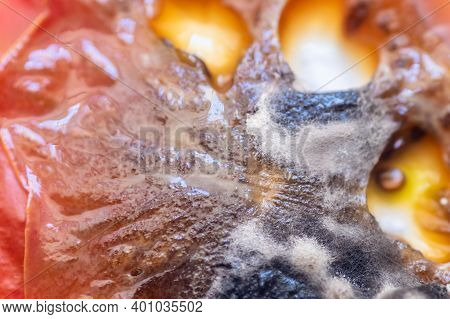 View Of Growing Mold On The Surface Of A Rotten Tomato.