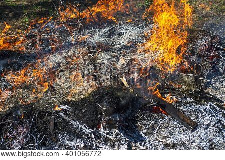 Wildfire. The Disaster Brings Regular Damage To Nature. Dead Forest After Wildfire.