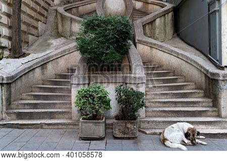 A Mongrel Lies At The Base Of The Kamondo Stairs In Istanbul