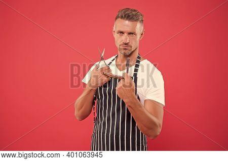 Real Barber. Professional Barber Pink Background. Bearded Man Hold Vintage Barber Tools. Barber Shop