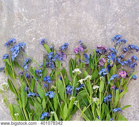 Bouquet Of Blue, Pink And White Forget-me-nots On A Gray Concrete Background. Spring Flowers.