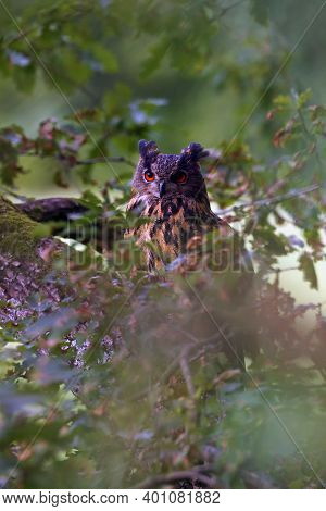 The Portrait Of Eurasian Eagle-owl (bubo Bubo) With Green Background. A Large Eagle Owl With Orange