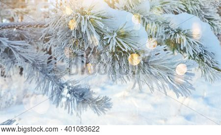 Frozen Pine Branch. A Tree Covered With Ice In The Extreme Cold. The Suns Rays Illuminate The Winter