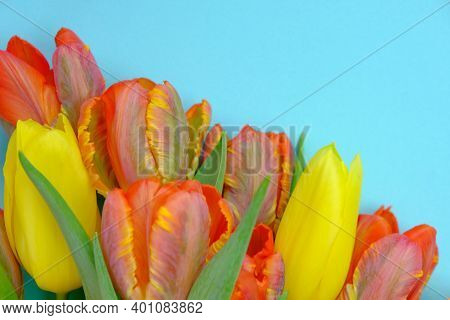 Tulips Flowers.floral Card With Tulips.red And Yellow Tulips Bouquet Close-up On A Blue Background.c