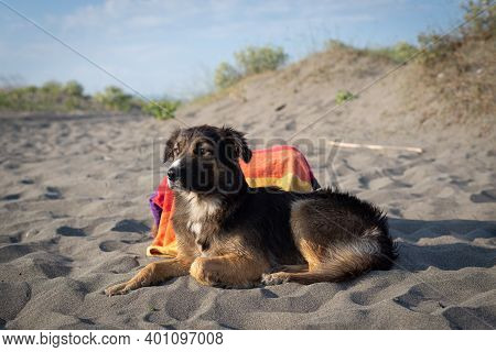 Portrait Of A Dog On Beach. Dog On Beach. Close Up Of Dog. Black And Brown Pet Dog Animal. Cute Dog