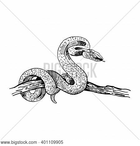 Snake On A Tree Branch. Hand-drawn Snake In Sketch Style. Vector Illustration Isolated On White.