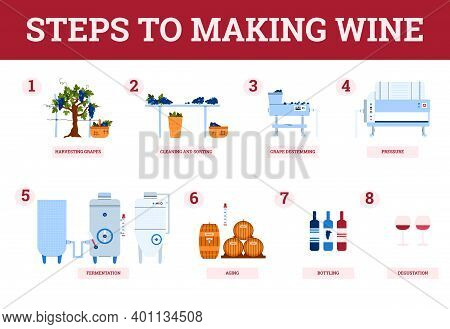 Wine Making Process Steps-from Harvest Grapes To Natural Grape Red Wine. Traditional Production Of A