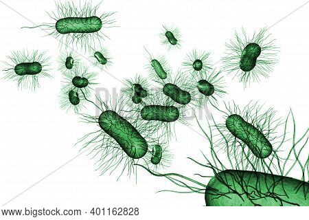 Escherichia Coli Also Known As Ecoli Bacteria Health Science Concept 3d Illustration