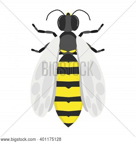 Wasp, A Stinging Striped Insect With Light Wings, A Symbol Of Strength And Aggression, A Flying Inse