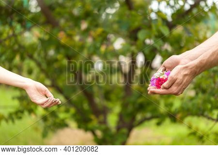 .a Man Gives Flowers To A Woman. Flowers In Men's Hands. Hand Gives Flowers With Love. Romance. Flor