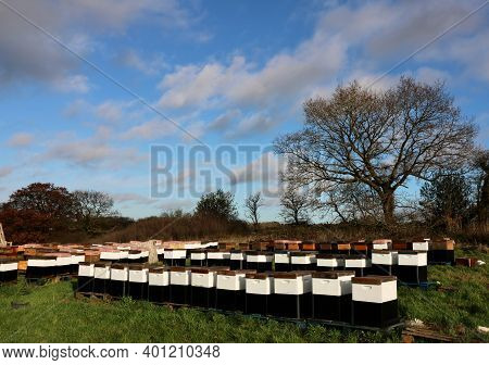 Group Of Beehives With Trees In Background Against Blue Cloudy Sky