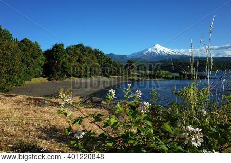 Nature of Chile beautiful landscape, Snow capped Villarrica volcano and Villarrica lake, blue sky sunny day. Dark volcanic sand beach. Grass and flowers unsharp foreground. Green environment, Pucon