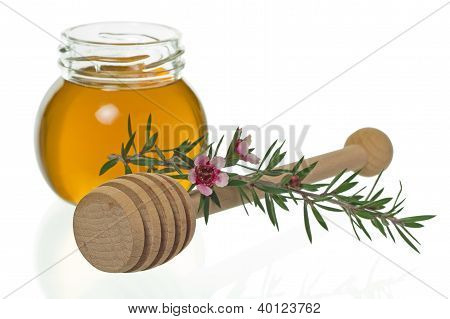 Jar of honey with dipper and manuka or New Zealand tea tree flower (Leptospermum) poster