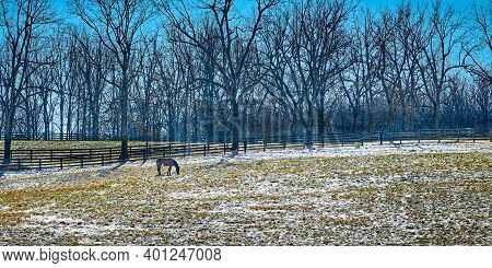 Thoroughbred Horse Gazing In A Snow Cover Fiield With Trees And Clear Blue Sky.