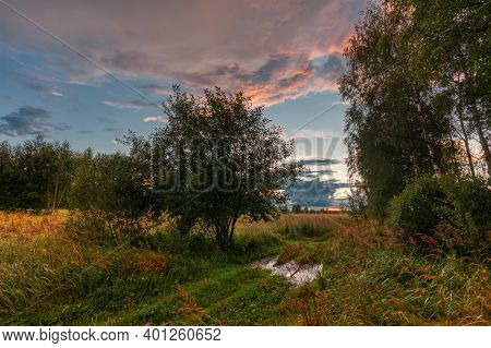 Path in a summer field in sunset light. Nature background