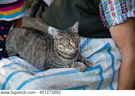 Young Tabby Cat With Emerald Green Eyes Sits On Laps Of Old Woman In Dirty Striped Apron. Shorthair