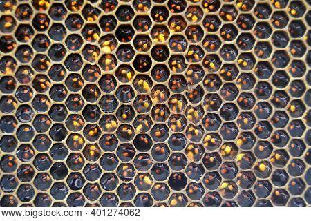 Drop Of Bee Honey Drip From Hexagonal Honeycombs Filled With Golden Nectar. Honeycombs Summer Compos