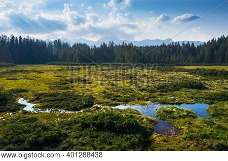 Highland Wetland In The Mountain Pine Forest. Pokljuka Is A Large Forested Plateau In The Triglav Na