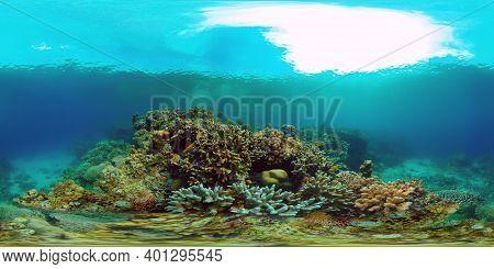 Underwater Scene Coral Reef. Coral Reefs Seascape. Underwater Sea Fish. Tropical Fish Reef Marine. P