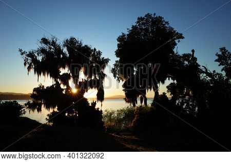 Nature of Chile. Evening light, Opposite sun rays shine through tree covered with Spanish moss on coast of lake Villarrica, blue sky, Pucon