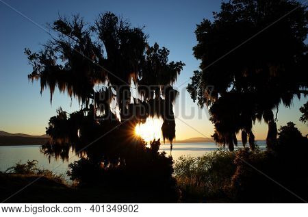 Nature of Chile. Evening light, Opposite sun shines through tree covered with Spanish moss on coast of lake Villarrica, blue sky, Pucon