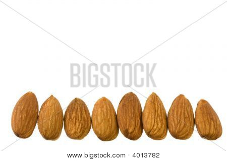 a row of shelled almond nuts isolated on white poster