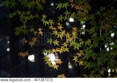 Best Beautiful Picture Of Colorful Maple Leaves