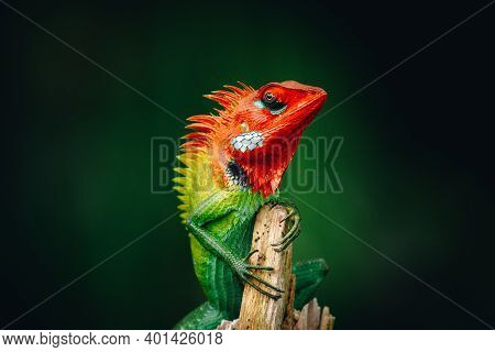Common Green Forest Lizard Chilling In The Wooden Pole, It Has Gradient Of Saturated Vivid Colorful
