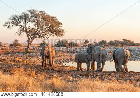 African Elephants At The Okaukeujo Waterhole In Northern Namibia