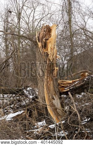 Death And Destruction Of A Tree Broken In The Forest, Fallen And Rotting On The Ground