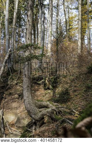 A High Tree Growing On A Huge Rock