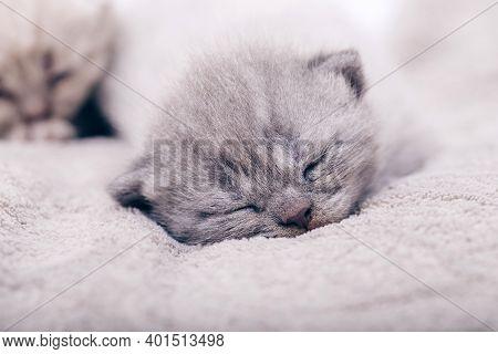 Cute Kitten. Love Kitten. Animal. Cat. Photo.