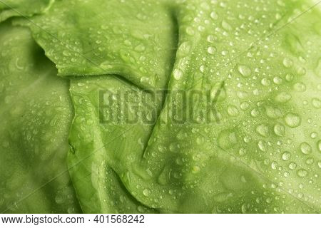 Close Up Of Cabbage Surface, Macro Leaf