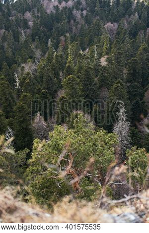 Beautiful View From Top Of Cliff To Green Coniferous Forest. Pines, Firs And Firs Grow In Valley. Be