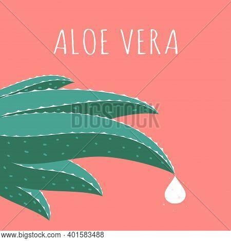 Aloe Vera Logo Template, Green Leaf Aloe Vera Isolated, Vector Illustration, Aloe Vera With Drop Of