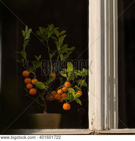 Tangerine In A Flowerpot Ready To Be Eaten, In The Window From An Old Building In Prague 6, Close To