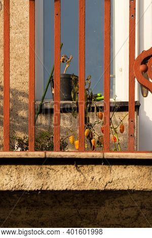 Flowerpot In The Balcony Of An Old And Stylish Building In Prague 6, Close To Hradcanska Tram Statio