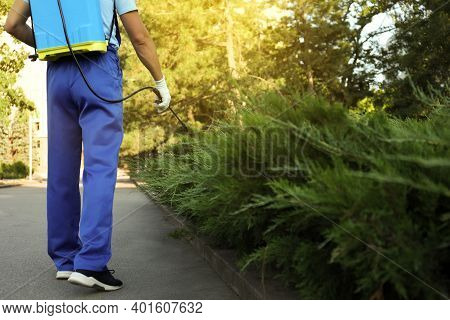 Worker Spraying Pesticide Onto Green Bush Outdoors, Closeup. Pest Control