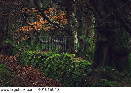 From The Lawn Covered With Orange Leaves Is Located Beautiful Old Stones Wall. Mystical Foggy Forest