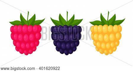 Blackberries, Raspberries And Cloudberries. Berries With Leaves, Design Elements In A Flat Style. Co