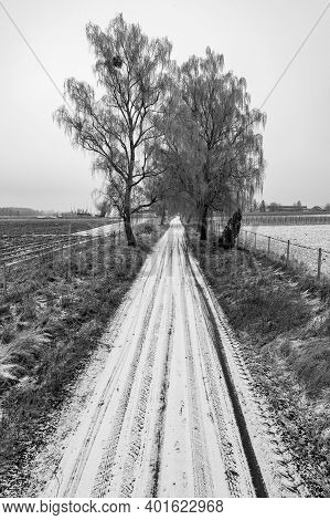 Dirt Road Between The Trees. The Vegetation And Hoarfrost Covered Trees.