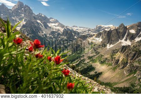 Looking Out Over Teton Range From Paintbrush Flowers On The Paintbrush Divide Trail In Summer