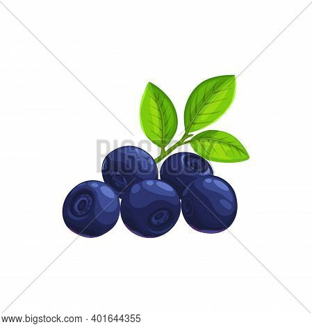 Blueberry Berries Fruits, Food From Farm Garden And Wild Forest, Vector Flat Isolated Icon. Blueberr