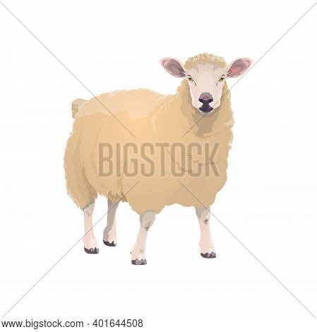Lamb Sheep, Farm Animal Icon, Vector Cattle Farming And Mutton Meat Food Product Symbol. Cartoon Iso
